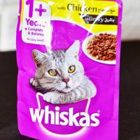 خرید پوچ گربه