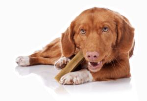 قیمت تشویقی سگ