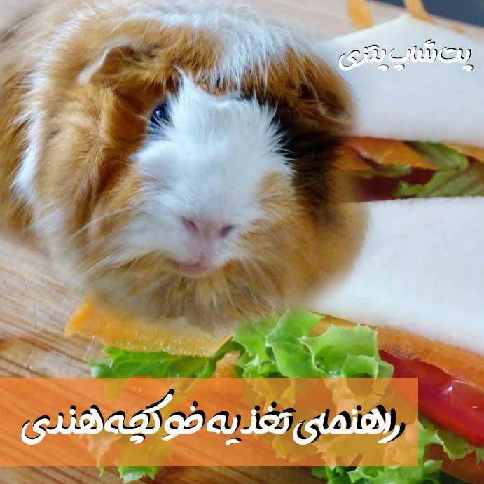تغذیه خوکچه هندی