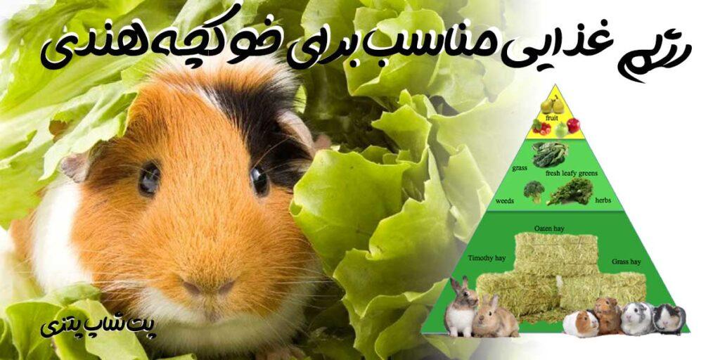 آموزش تغدیه خوکچه هندی