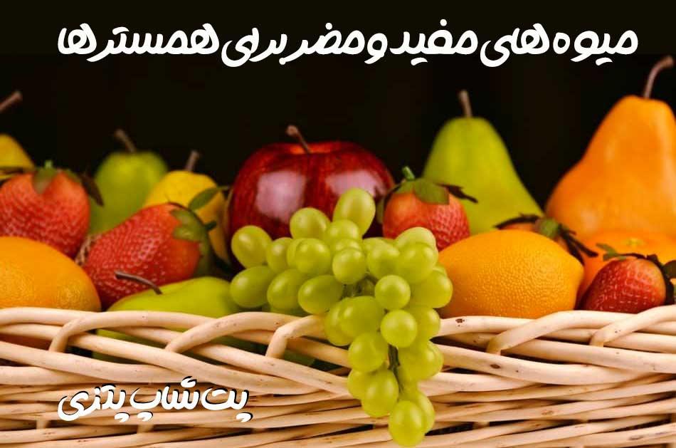 میوه های مجاز برای همسترها