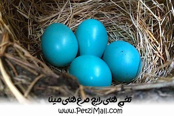 تخم مرغ مینا