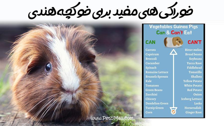 غذاهای ممنوع برای خوکچه