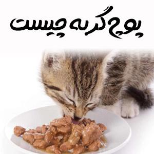 پوچ گربه چیست